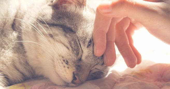 Pet Therapy e oncologia: come gli animali possono fare la differenza