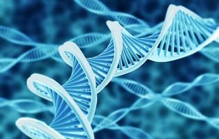 Nuova classificazione del carcinoma epatocellulare